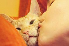 Para criar um gato carinhoso, que não é agressivo com as pessoas e gosta de colo, donos precisam incorporar alguns comportamentos em sua rotina, tais como