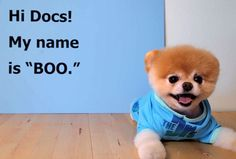 Video clips, celebrity interviews and health news, plus healthy recipes, giveaways, and helpful tips from the Emmy Award-Winning World Cutest Dog, Health Tips, Nutrition Tips, Puppy Eyes, Dog Names, Pomeranian, Four Legged, Maltese, Cute Dogs