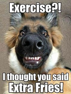 Funny Animal Pictures with Captions Source by lindyoh dog dog memes dog videos videos wallpaper dog memes dog quotes dogs dogs pictures dogs videos puppies puppy video Funny Animals With Captions, Funny Animal Jokes, Funny Dog Memes, Really Funny Memes, Cute Funny Animals, Animal Captions, Funny Shit, Funny Dog Pics, Pet Memes