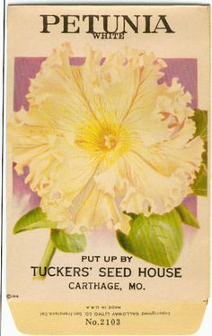 Wow-wish i could order the seeds that were in this 1910 Tuckers Seed House packet!! It looks incredible with all those lacy picotee frills! 100 years ago, breeders hadn't bred out the rich,frankly sensual Petunia fragrance.The artist who illustrated the Tucker's seed packets obviously loved his/her subject;Georgia O'Keefe couldn't have done better! Vintage Flower Seed Packet Tuckers Seed House by gardenlelah, $6.00