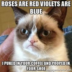 Hell No Kitty .For more humor pics and grumpy kitty visit Grumpy Kitty, Grumpy Baby, Grump Cat, Ohhh Yeah, Cat Jokes, Hilarious Jokes, Cats Humor, Funny Humor, Financial Accounting