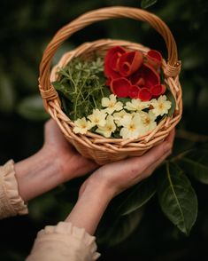 Poisonous Plants, Edible Plants, My Spring, Spring Green, Wild Garlic, Primroses, Herb Pots, Eating Raw, No Bake Treats