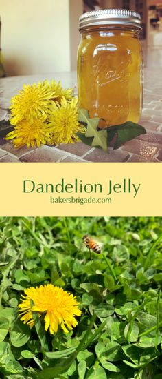 Dandelion Jelly Recipe-Delicate, Honey-Like Flavor of Spring Sunshine Dandelion Jelly, Dandelion Flower, Edible Plants, Edible Flowers, Dandelion Recipes, Bitter Greens, Food Dye, Jelly Recipes, Wild Edibles