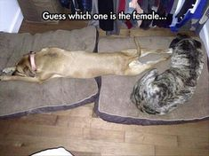 18+ Viral Animal Photos You'll Find Fairly Decent