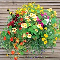 Nasturtiums   *trap aphids, repel beetles, white flies and squash bugs ( good for fruit and veggie gardens) and the flower and leaves are edible (spicy in flavor)