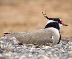 Birdwatching, Lens, Happiness, Birds, Twitter, Birthday, Black, Birthdays, Bonheur