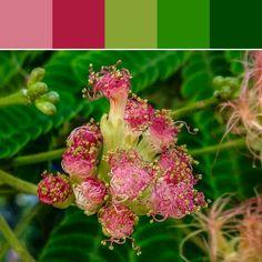《Pink Fuzzy Flower Palette》