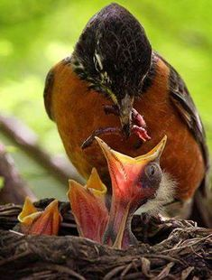 Furry and Feathery Babies in Spring All Birds, Little Birds, Love Birds, Angry Birds, Pretty Birds, Beautiful Birds, Animals Beautiful, Animals And Pets, Baby Animals