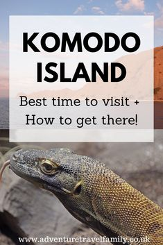 Best Time To Visit Komodo Island + How To Get There From 5 Destinations - Adventure Travel Family Bali With Kids, Travel With Kids, Family Travel, Komodo Island, Gili Island, Bali Travel Guide, Asia Travel, Travel Tips, Komodo National Park