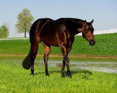 AQHA Stallion Moonlight In Motion