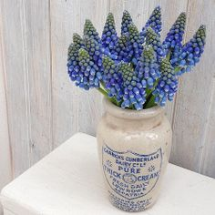 Muscari in vintage cream jar. On the blog - Florets - floral quote by  Rachel Ashwell of Shabby Chic. Styling and photography © Ingrid Henningsson for Of Spring and Summer