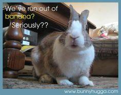 Cute Baby Bunnies, Funny Bunnies, Cute Babies, Baby Animals, Funny Animals, Cute Animals, Bunny Meme, Bunny Quotes, Bunny Art