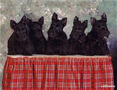 Awesome Scotties