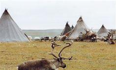 Discuss on Yamal reindeer breeding law - Legislation: Arctic-Info Siberia Russia, Arctic, Reindeer, Law, Animals, Animales, Animaux, Animal, Animais
