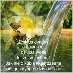 Lany, Glass Vase, Herbs, Humor, Easter, Polish, Funny, People, Humour