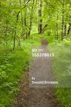 Stock Photo : Curving Trail through Spring Woods