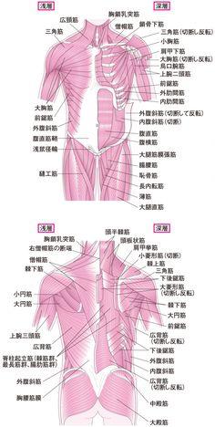 骨下半身のイラスト - 医療のイラスト・写真・動画 …