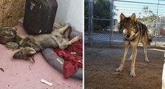 Когда один молодой человек из города Тусон, штате Аризона, США, увидел на доме вывеску «бесплатный щенок», то он без особых раздумий постучал в дверь, чтобы взять одного к себе домой. Он …