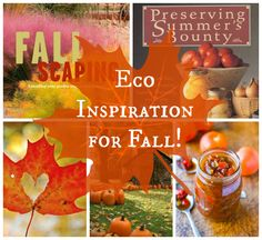 Want to be eco-friendly in fall? Check out these autumn ideas for cooking, canning, crafts, gardening and more! https://read.rifflebooks.com/list/28280