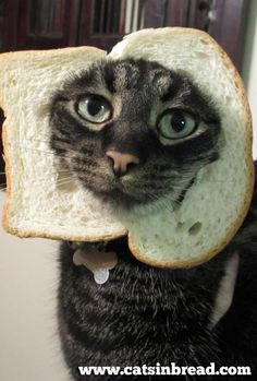 Someone Better Call Animal Rights Got Another BREADED CAT
