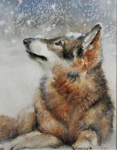 Wolf - art