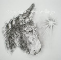 """Tricia Wellings ~ For the Love of Donkeys, December 7, 2015,    """"Peggy"""" says hello, and wishes you all a very Happy Christmas! I fell in love with her beautiful face, and drew her in charcoal. x Tricia at Tricia Wellings Fine Art"""