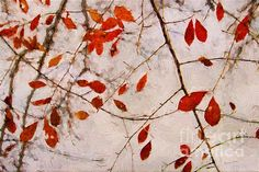 Leaves Of Autumn by Darren Fisher