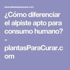¿Cómo diferenciar el alpiste apto para consumo humano? - plantasParaCurar.com