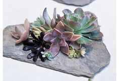 A Succulent & Slate How-To:  would be pretty for a table center piece.