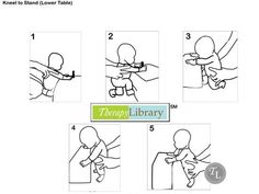 Facilitating Kneel to Stand in Infants  http://therapylibrary.com/index.php?option=com_content=article=458=3266