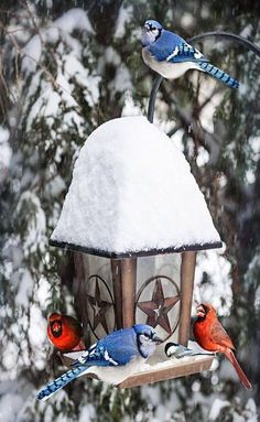 Get to see them everyday, anytime, any weather...love the birds here that I feed everyday..big and small.