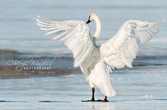 Angel Wings Cheryl Windels Photography