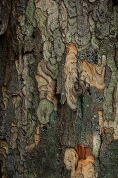 Bark | Flickr - Photo Sharing!