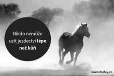 Zamysli sa a precíť to Equestrian Quotes, Unique Animals, Horse Love, True Words, Be Yourself Quotes, Quotations, Texts, Haha, Horses