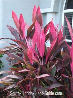 tropical plants of florida - photos | unusual plants with glorious flowers or tropical foliage or both