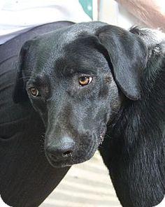 DFA RESCUE ACROSS THE NATION; Rescue info: Natchitoches, LA - Meet Josie Mae a Dog for Adoption.