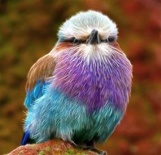 exotic colorful little bird