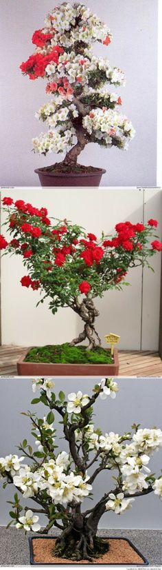 Collection of Bonsai