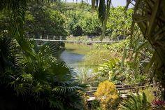 Roatan Park, Roatan Canopy Tours   About Gumbalimba Park
