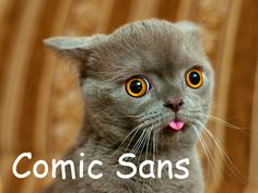 20 Cats As Fonts