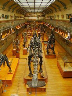 Museu História Natural de Paris