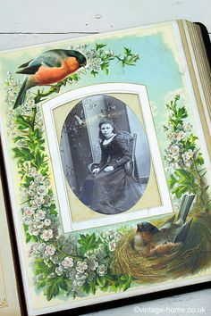 Vintage Home Shop - Victorian Full Colour Chromoliths Birds Album - Finch on the nest in May - www.vintage-home.co.uk