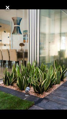 Indoor Garden Office and Office Plants Design Ideas For Summer 50 garden Outdoor Plants, Outdoor Gardens, Succulents Garden, Planting Flowers, Garden Plants, Dry Garden, Home And Garden, Office Plants, Garden Office
