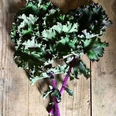 This is how much we love our beautiful kale Organic Vegetables, Kale, Plants, Beautiful, Collard Greens, Plant, Planting, Planets, Cabbages