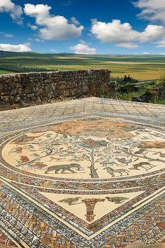 Beautiful mosaic floor: House of Orpheus, Volubilis, Morocco