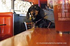 11 Reasons Why Seattle is the Most Dog Friendly City from http://www.YouDidWhatWithYourWiener.com