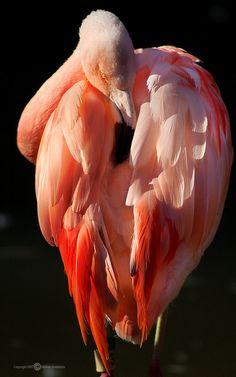""" Sunset Flamingo by Melissa_A on Flickr. """