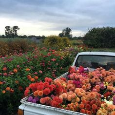 Find images and videos about beautiful, aesthetic and nature on We Heart It - the app to get lost in what you love. My Flower, Pretty Flowers, Wild Flowers, Flower Farm, Flower Truck, Beautiful Flowers Garden, Colorful Flowers, Spring Flowers, Nature Aesthetic