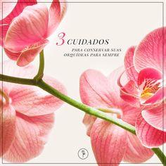 Deixando orquídeas sempre bonitas Orchidaceae, Green Garden, Orchids, Banner, Rose, Plants, Design, Gardening, Link
