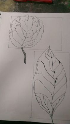 Two Leaves I gave drawn.